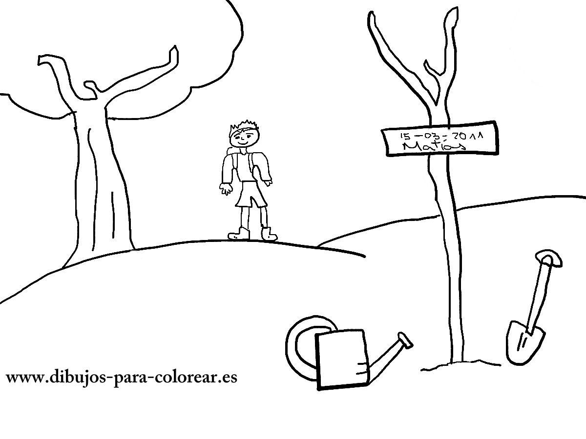 Dibujos para colorear - el dia del arbol