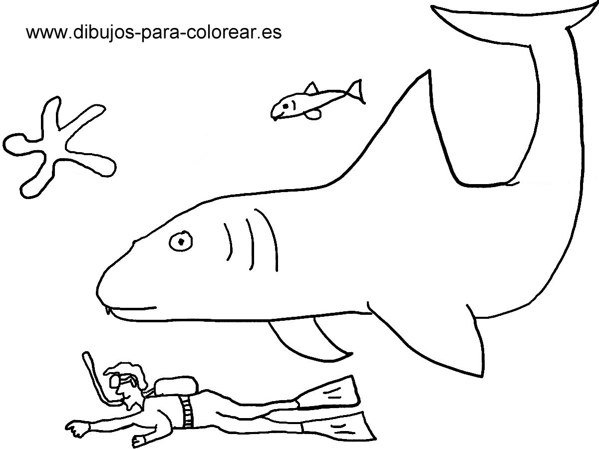 Dibujos para pintar - tiburon buceador mar