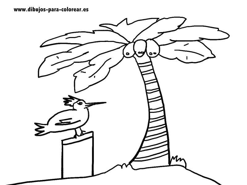 Dibujos para colorear- palmera y cocos